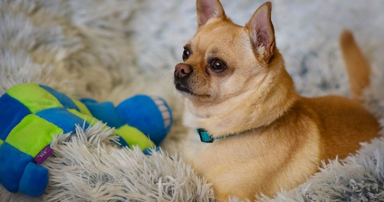 Quando applicare gli antiparassitari per cani?