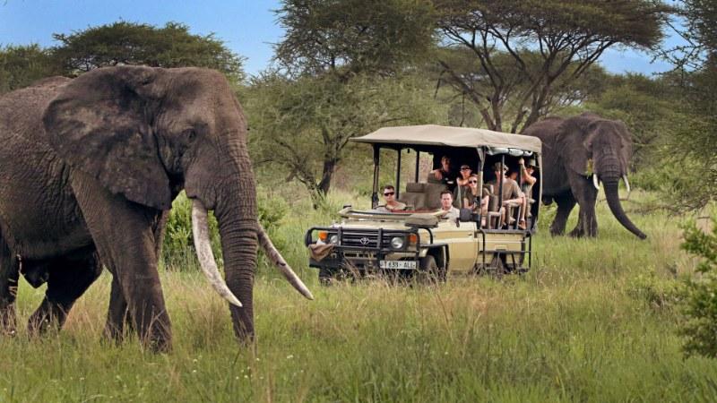 Tutto quello che bisogna sapere per organizzare un safari in Tanzania